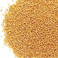 Whole Yellow Mustard Seeds All Natural by Its Delish, 10 lbs Bulk