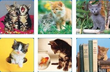 Hi-Look Inc. Keith Kimberlin Kittens I assorted