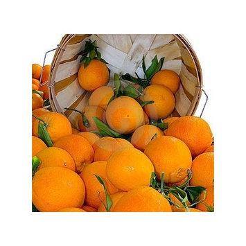 Organic Mountain Navel Oranges 1 Dozen (12)