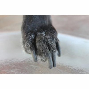 Canvas Print Nails Long Animal Pet Paw Claw Dog Grooming Dog Stretched Canvas 10 x 14