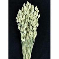 Natural Dried Phalaris Grass - 4 oz Bunch