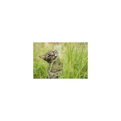 Framed Art For Your Wall Kitten Animal Cat Whiskers Feline Pet Mammal 10x13 Frame
