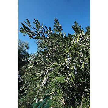 Gaea Gourmet Kalamata Olives Marinated with Thyme, Oregano, Orange Peel & Red Pepper - 4.2 oz (Pack of 8)