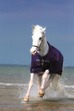 Amigo Pony 600D Medium 60