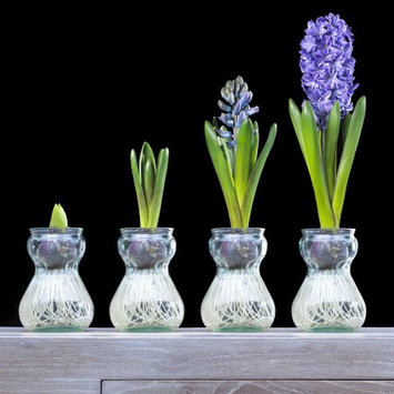 Van Zyverden Hyacinth Kit- Blue With Clear Artisan Glass