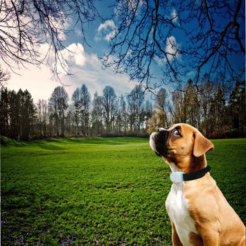 Medex Pet Flea & Tick Pest Repeller Collar Ultrasonic Pet Dog Cat ANTI Fleas Tick Natural Treat