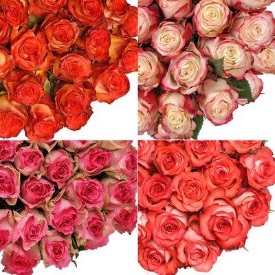 Fresh Cut Assorted Bicolor Roses, 20