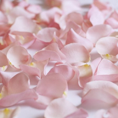 Fresh Pink Rose Petals, Approximately 3000 units by InBloom Group