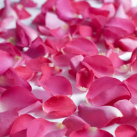 Fresh Hot Pink Rose Petals, Approximately 3000 units by InBloom Group