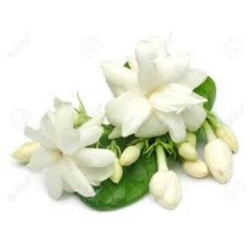 Jasmine Fragrance Oil 2 ounces