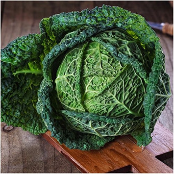 Seed Needs: Vegetables Package of 300 Seeds, Savoy Perfection Cabbage (Brassica oleracea) Non-GMO Seeds By Seed Needs