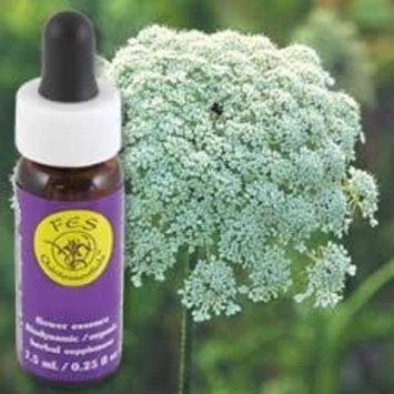 Flower Essence Services Herbal Supplements Essence, Queen Anne's Lace, 0.25 Ounce [Queen Anne's Lace]