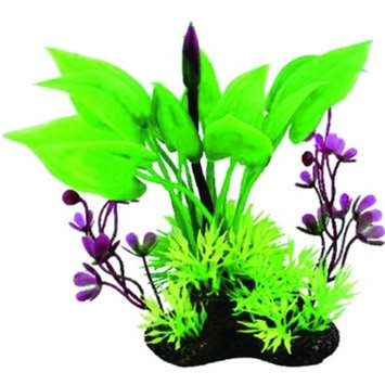 Pure Aquatic Tropical Elements Arum Marsilea Combo 5 Inch Green 261585