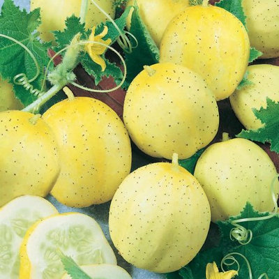 Mountain Valley Seed Company Lemon Cucumber Garden Seeds - 4 Oz - Non-GMO, Heirloom Vegetable Gardening Seeds - Yellow Cucumbers
