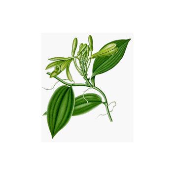Faeries Finest Vanilla Extract, 15.99 Ounce
