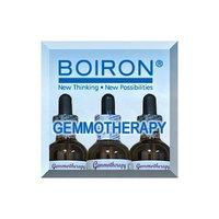 Gemmotherapy - Silver Birch, Seeds - 2oz