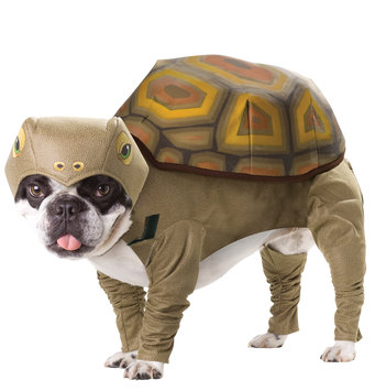 California Costume Collections Pet Tortoise Animal Planet Medium Costume