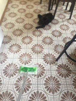 Swiffer Sweeper X-Large Floor Mop Starter Kit uploaded by Stacey S.