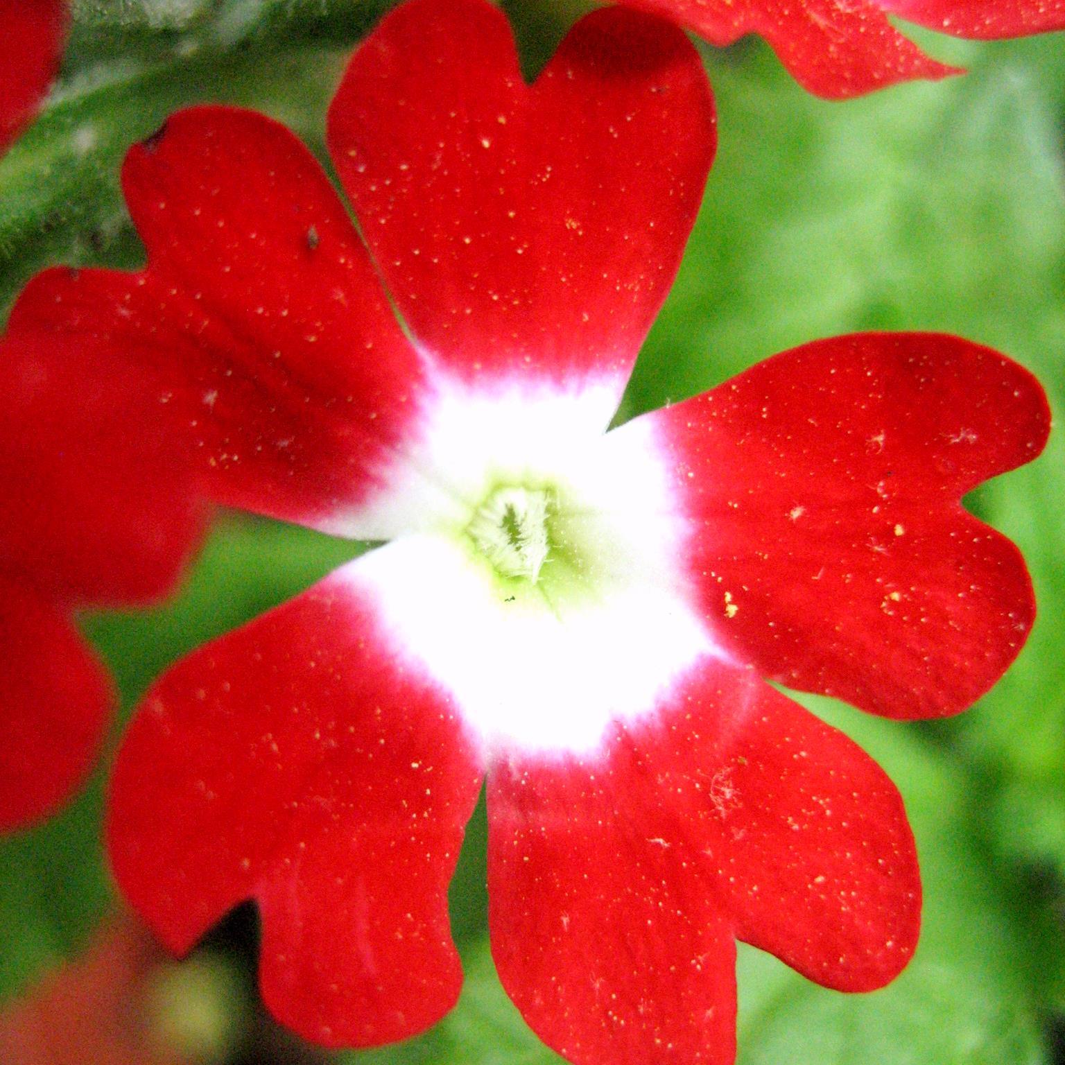 Nature S Bounty Garcinia Cambogia Supplement Reviews