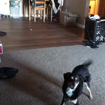 Video of BarkBox uploaded by Kimberly H.