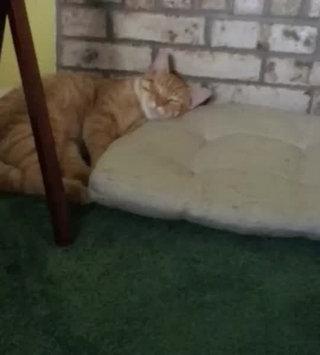 Video of TEMPTATIONS™ MixUps Treats For Cats Catnip Fever Cat Treats uploaded by Sarah D.